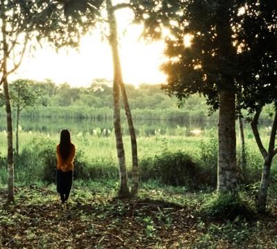 Jungle Mare